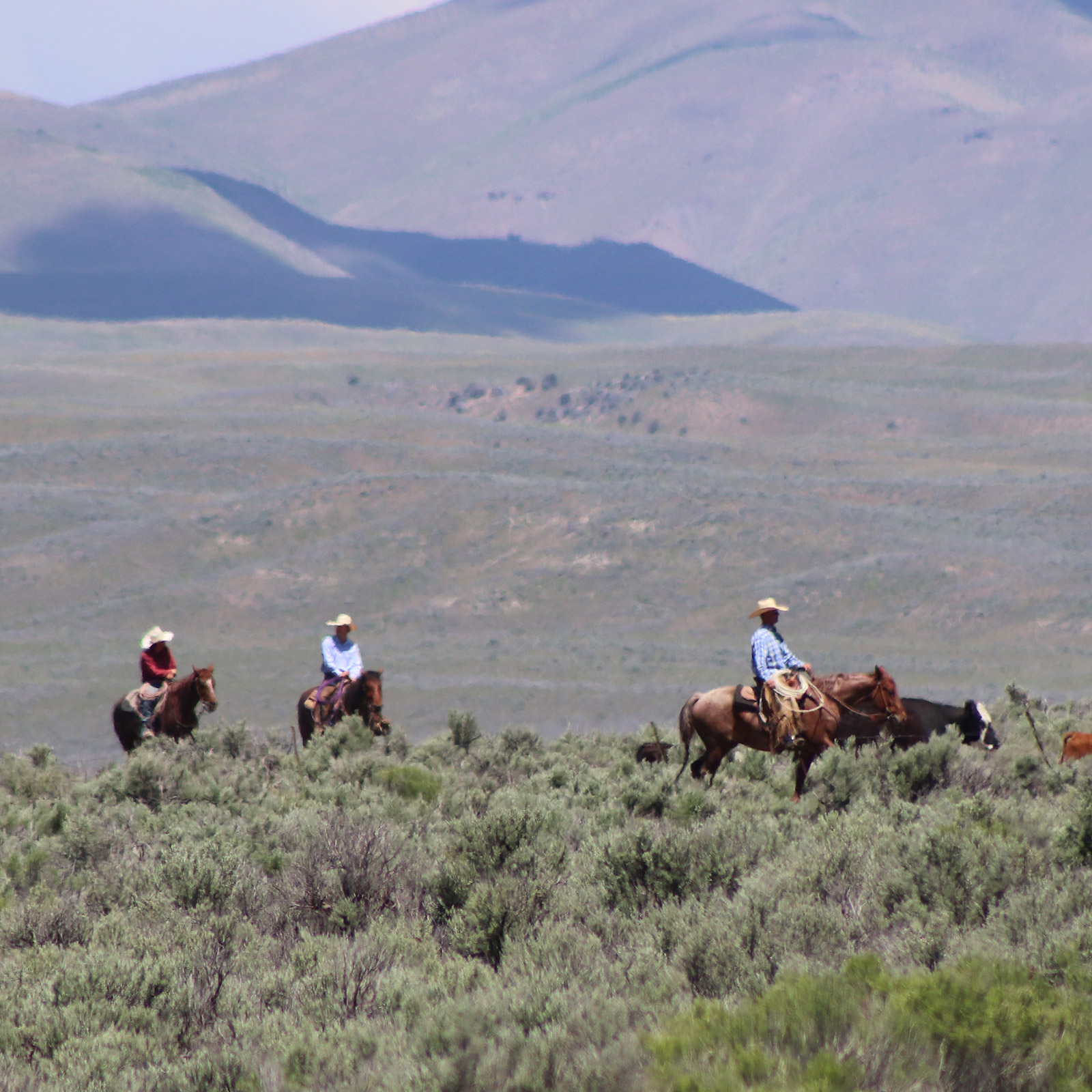 Sustainable management of our ranches in Nevada allows us to conserve sensitive natural habitats.